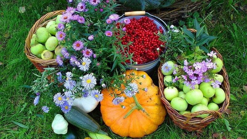 Какие овощи растут летом в огороде?
